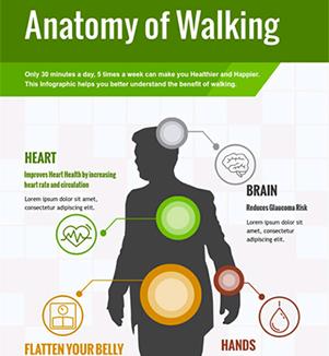 Template - Anatomy of Walking