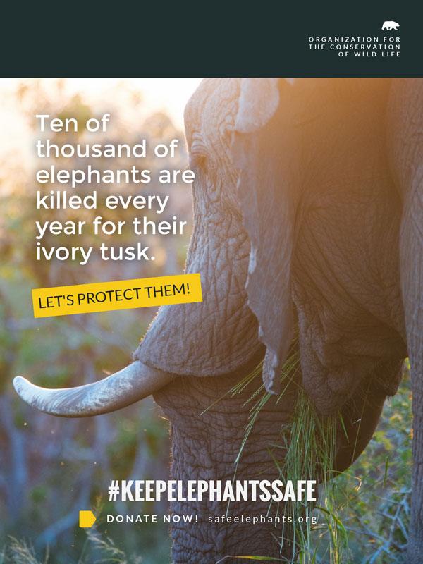 animal nonprofit poster template visme